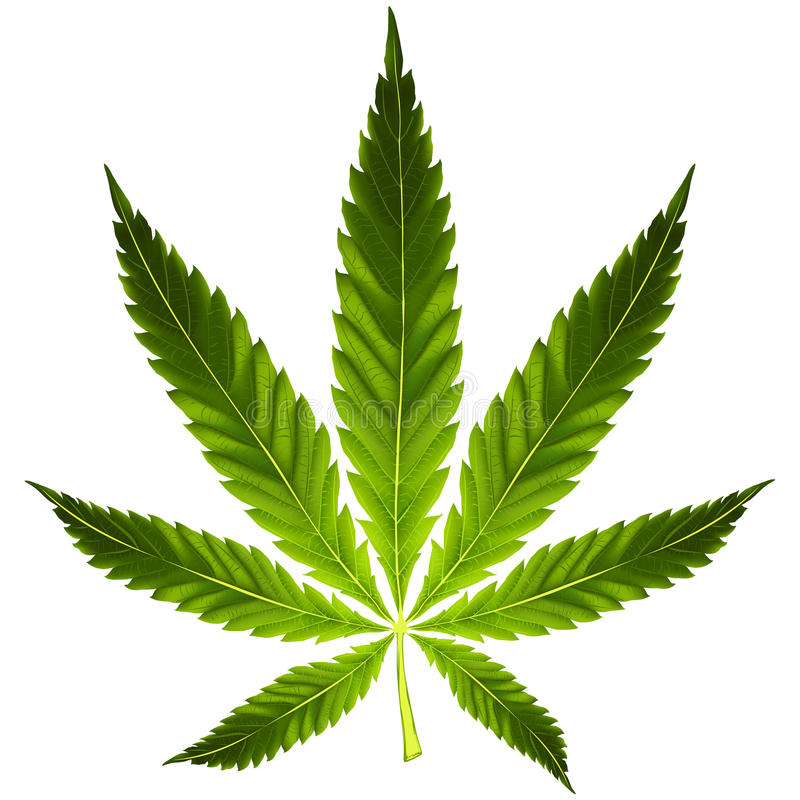 Free Cannabis Leaf Stock Photo - 42842160