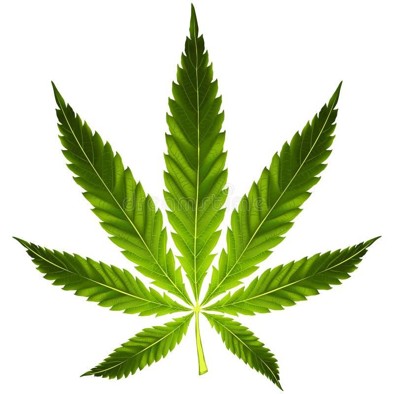 Cannabis leaf royalty free illustration