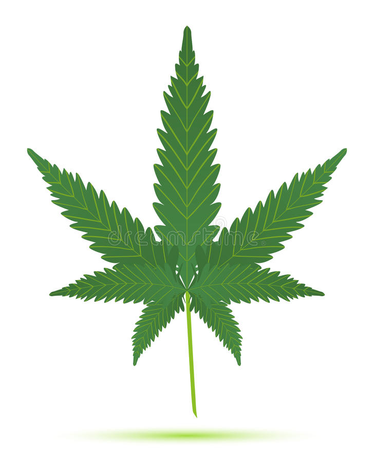 Download Cannabis leaf isolated stock vector. Image of herbal - 23841740