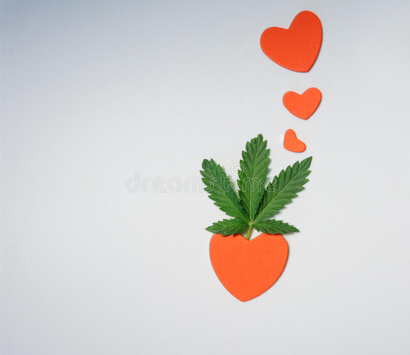 Cannabis leaf on a light background and red hearts. royalty free stock photography