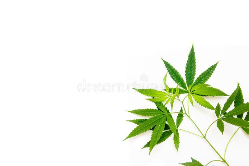 Cannabis leaf, marijuana isolated on white background royalty free stock photos