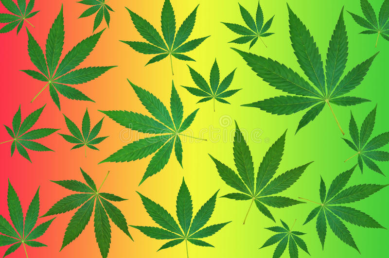 Cannabis leaves on colorful background pattern stock illustration
