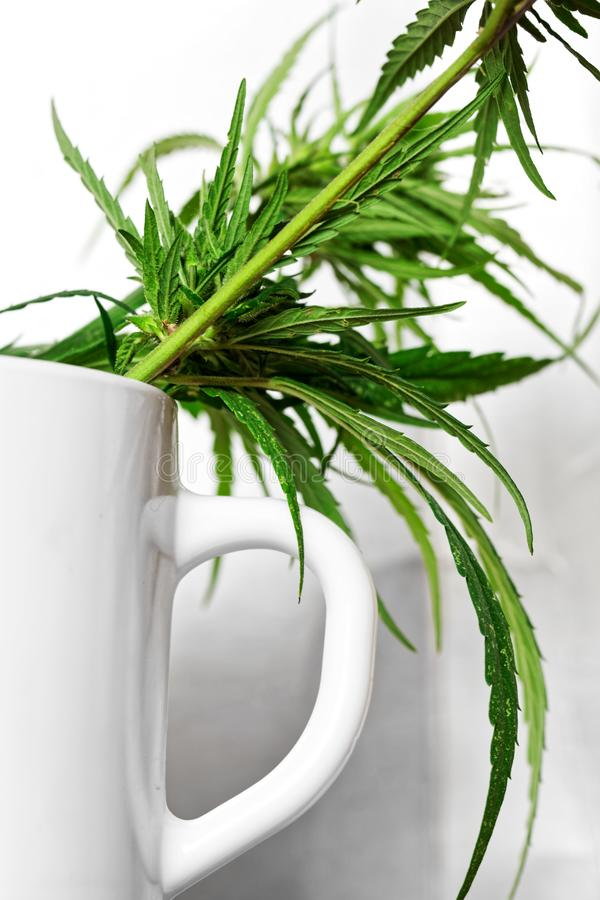 Cannabis leaves and flowers in a white mug on a light background. Psychotropic substances and medicine. Shallow depth of field royalty free stock images