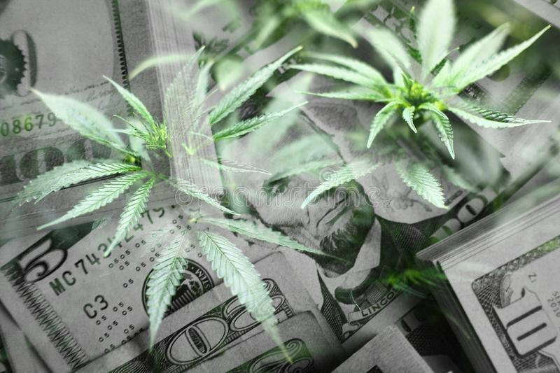 Cannabis Leaves With Money stock photo