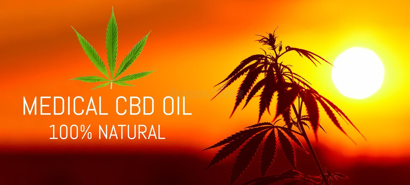 Cannabis medica premio crescente, prodotti della canapa dell'olio di CBD Marijuana naturale Ricetta della cannabis per uso person immagine stock libera da diritti