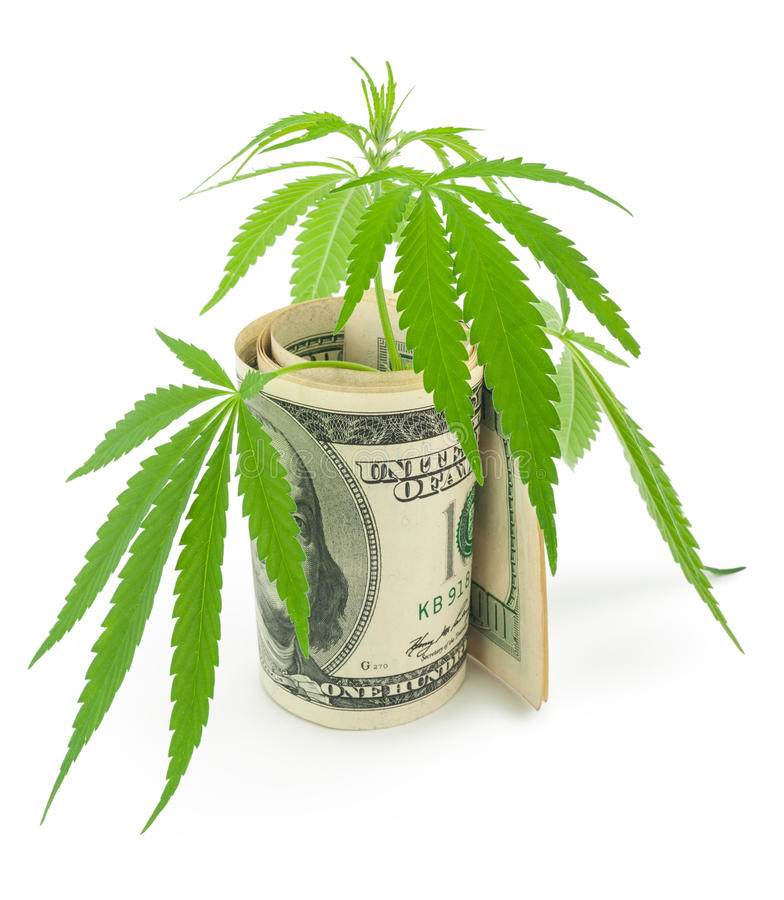 The cannabis and money. On white background royalty free stock photos