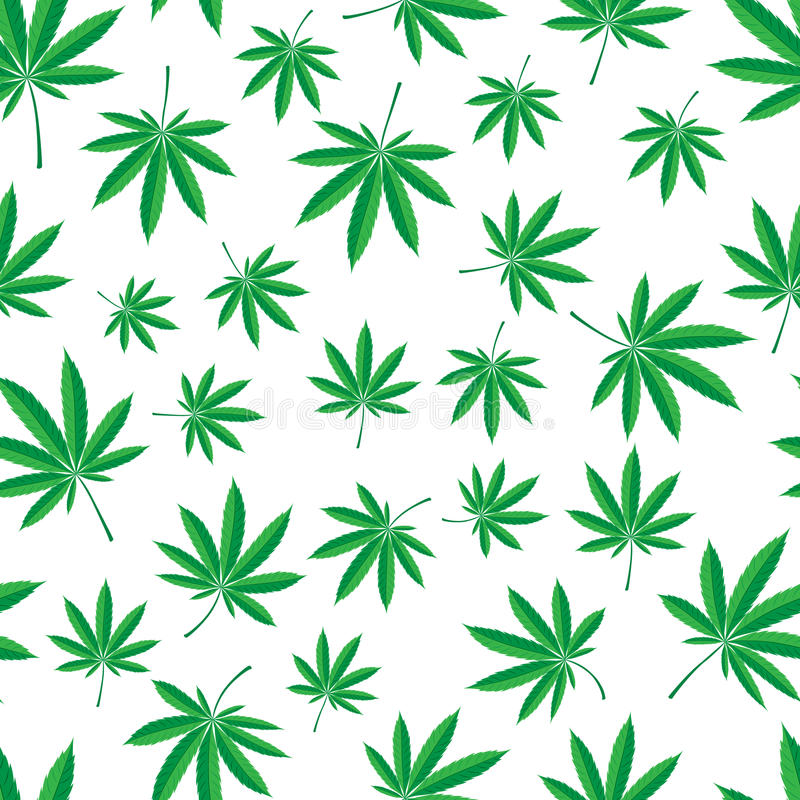 Cannabis pattern. Vector seamless pattern of cannabis leaf vector illustration