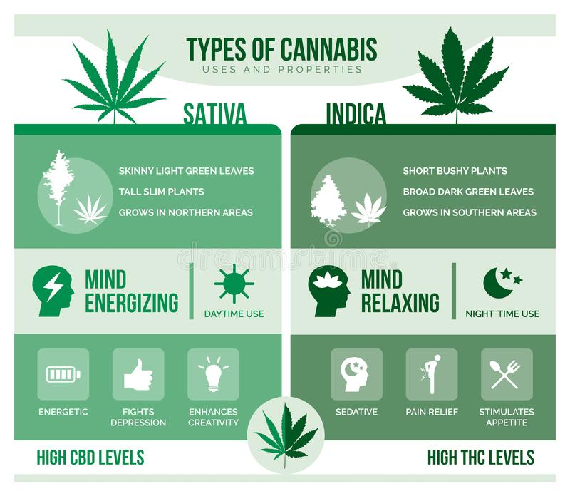 Cannabis sativa and cannabis indica health benefits. Cannabis sativa and cannabis indica: differencies and health benefits infographic stock illustration