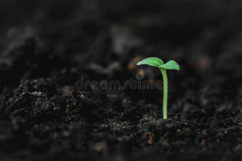 cannabis Växttillväxt på marken royaltyfri fotografi