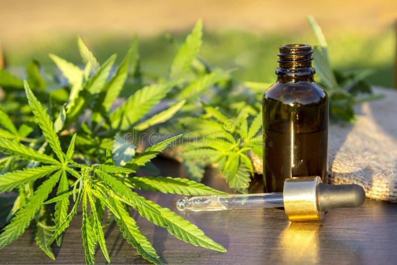 Cannabis verde do ramo com as cinco folhas dos dedos e o conta-gotas da pipeta com gota perto da garrafa de vidro com óleo de cân fotografia de stock royalty free