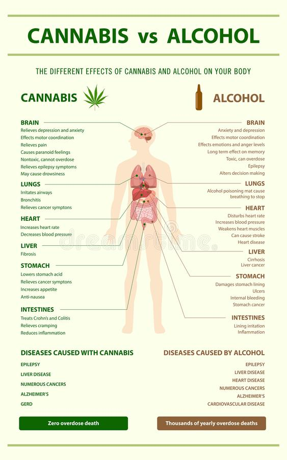 Cannabis vs Alcohol vertical infographic royalty free stock photos