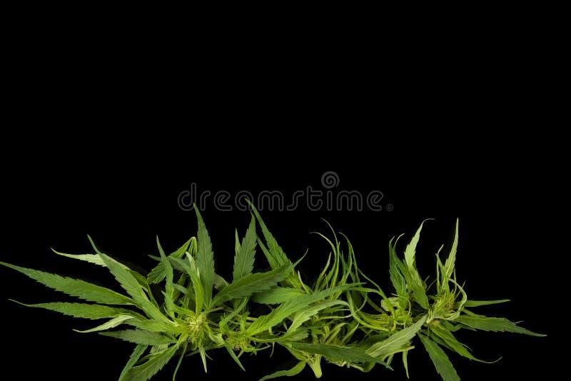 Cannabisachtergrond met exemplaarruimte royalty-vrije stock foto's