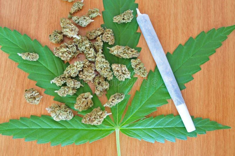 Cannabisblad met knoppen en verbinding royalty-vrije stock foto