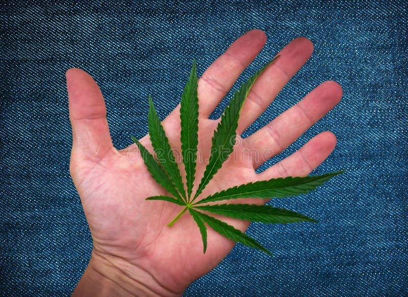 Cannabisblad op de palm marihuana op de textuur van de denimstof stock foto's