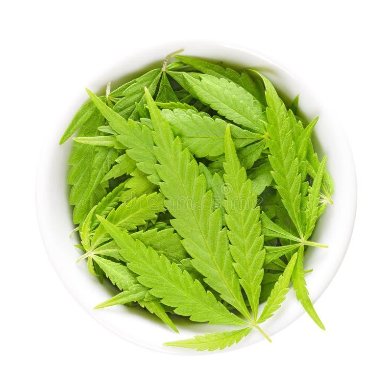 Cannabisbladeren, hennep, in witte porseleinkom royalty-vrije stock afbeeldingen