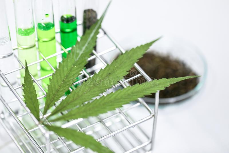 Cannabisdrugs, Analyse van Cannabis in laboratorium royalty-vrije stock afbeelding