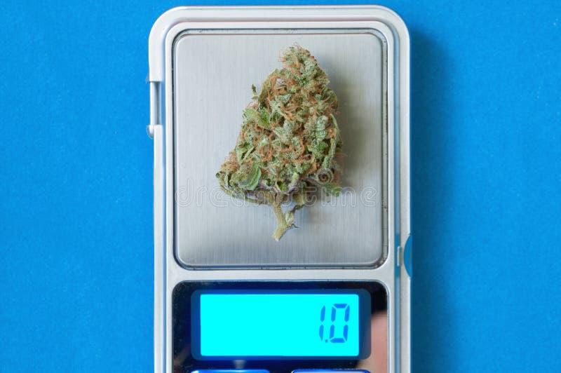 Cannabisväxtslut upp arkivbild