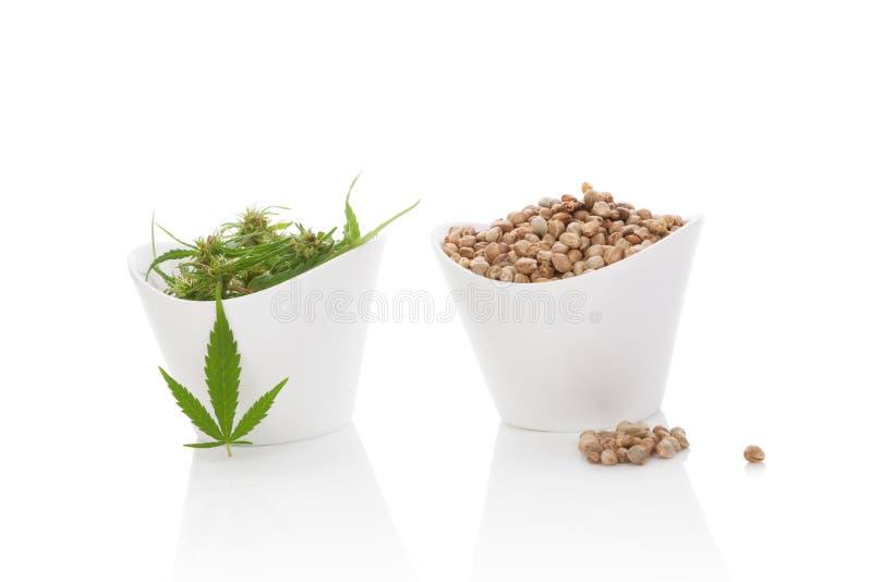 Cannabiszaden en marihuanaknoppen royalty-vrije stock afbeeldingen