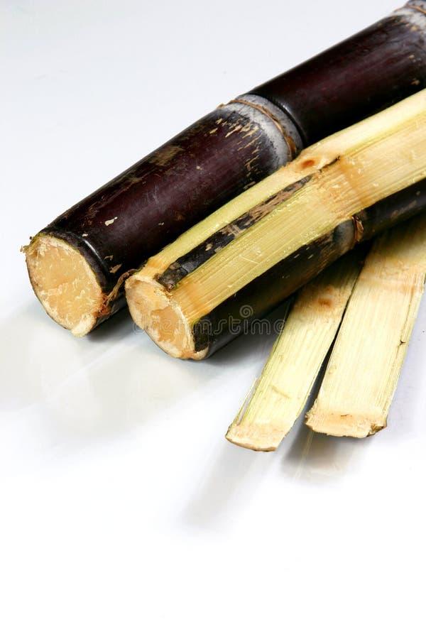 Canne à sucre image libre de droits