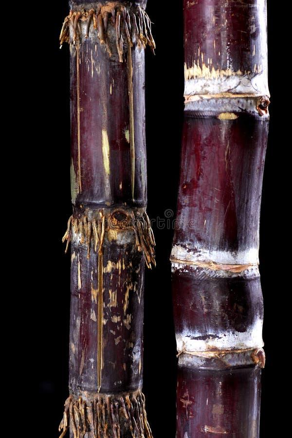 Canne à sucre photo libre de droits