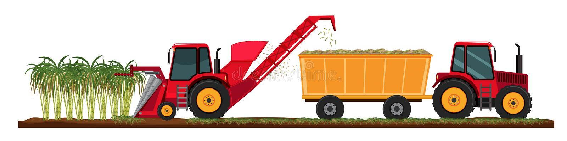Canne à sucre cultivant la récolte illustration de vecteur