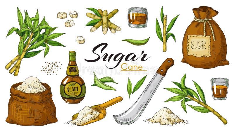 Canne à sucre et rhum tirés par la main Cannes et feuilles colorées de boissons alcoolisées de cru et de sucreries Le vecteur a i illustration stock