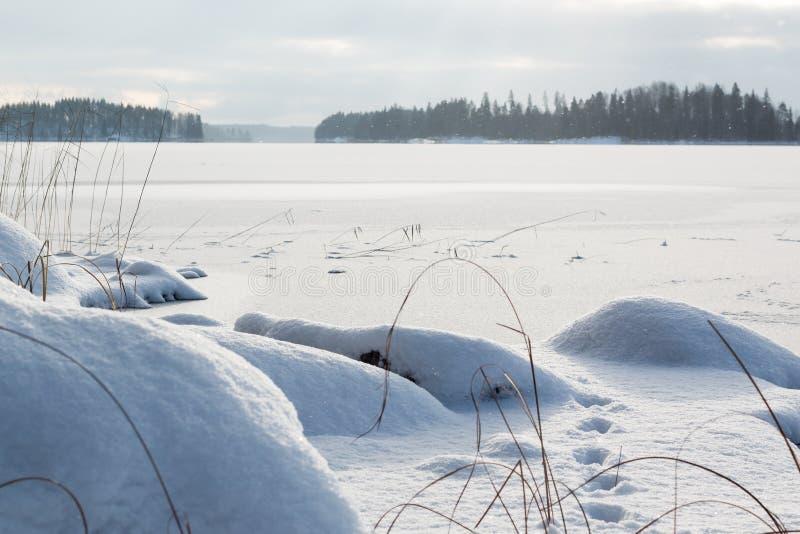 Canne appassite alla riva nevosa di un lago congelato fotografia stock