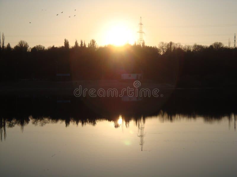 Canne brune sèche de rivière dans les rayons ensoleillés de coucher du soleil de l'hiver Beau gland tubulaire photo stock