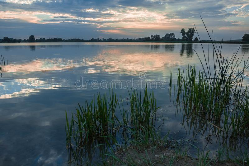 Canne che crescono sulla riva del lago immagini stock
