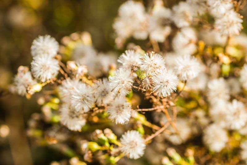 Canne d'herbe sauvage sur le lac/roseaux dans le rivage proche de lac au jour venteux ensoleill? image stock