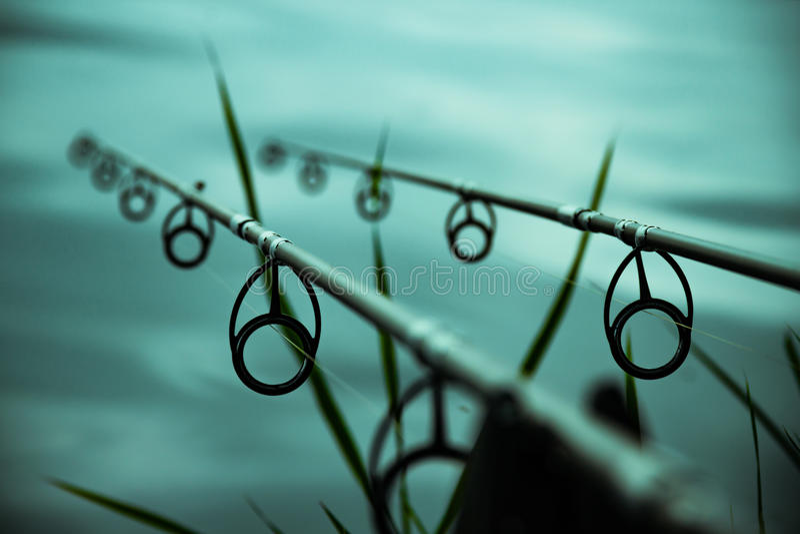 Canne da pesca della carpa fotografia stock libera da diritti
