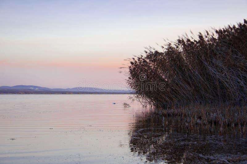 Canne intorno al lago al tramonto caldo fotografia stock libera da diritti