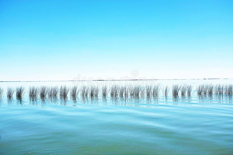 Canne sul lago fotografie stock