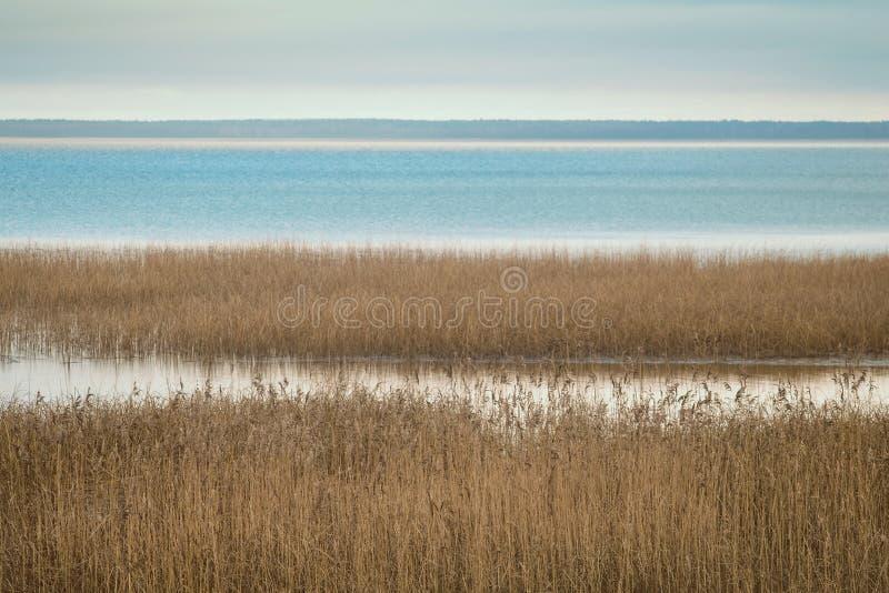 Canne sul lago immagini stock libere da diritti