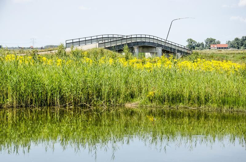 Canne, wildflowers e ponte concreto fotografie stock