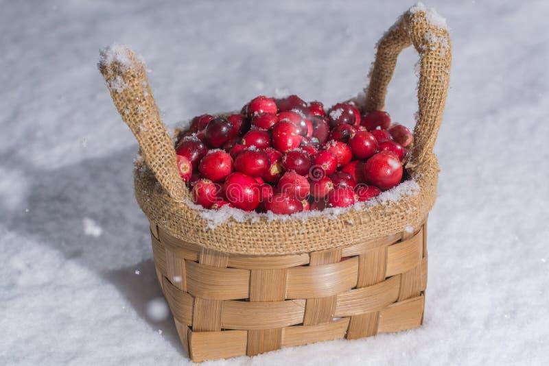 Canneberge rouge fraîche sur la neige blanche, hiver, nourriture saine photo libre de droits