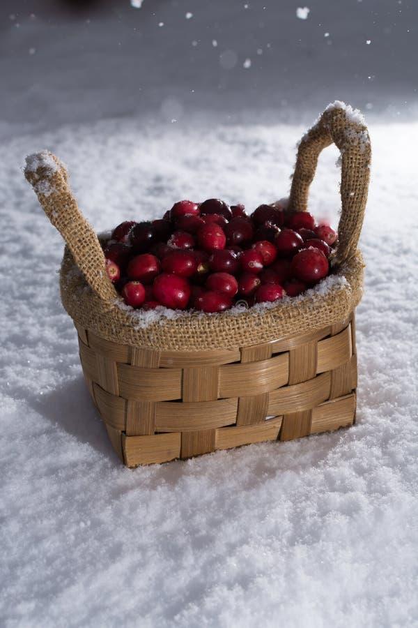 Canneberge rouge fraîche sur la neige blanche, hiver, nourriture saine images libres de droits