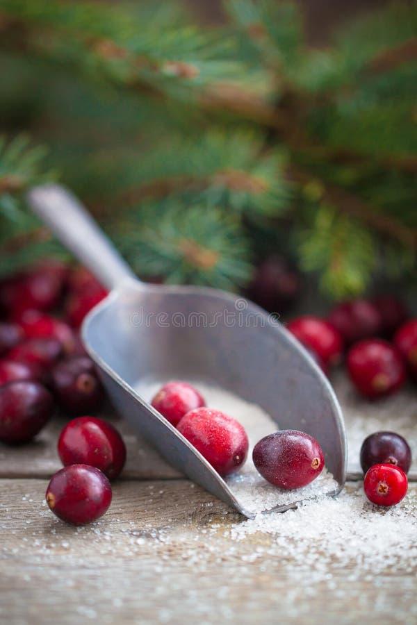 Canneberges fraîches de Noël au foyer sélectif de tradition russe de nouvelle année de sucre photographie stock libre de droits