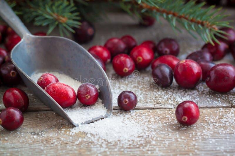 Canneberges fraîches de Noël dans la tradition de Russe de nouvelle année de sucre image libre de droits