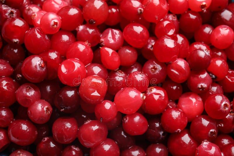 Canneberges rouges fraîches comme fond photo stock