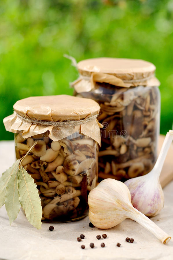 Canned Marinated Honey Fungus, copy space for your text stock photos