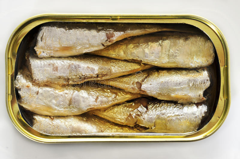 Canned sardines. An open can of sardines on a white background stock photos