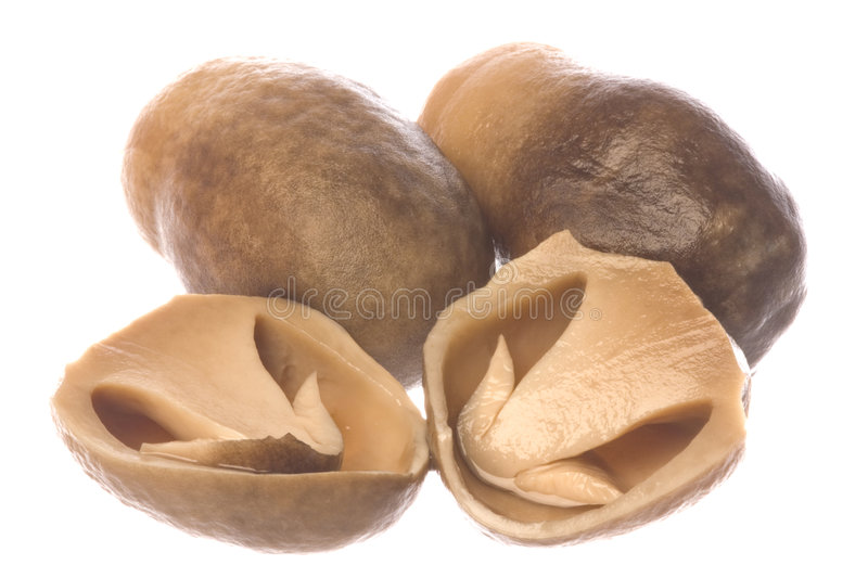 Canned Straw Mushrooms Isolated stock photo
