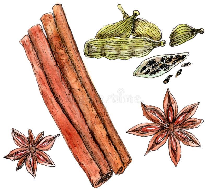 Cannelle d'aquarelle, cardamome et anis d'étoile image stock