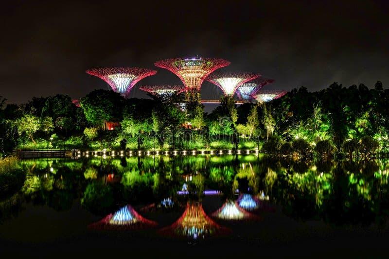 Cannelure superbe d'arbre aux jardins par la baie, Singapour images stock