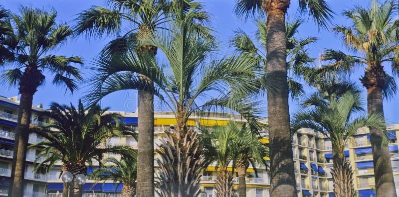 Cannes stock afbeeldingen