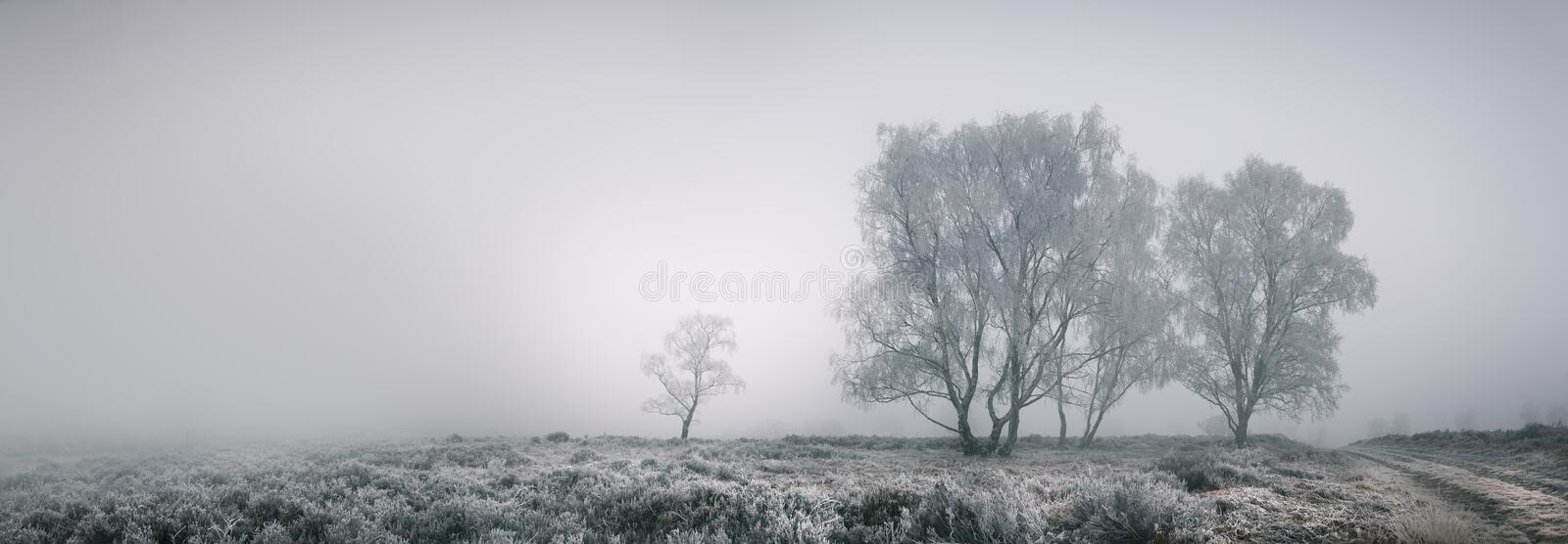 Download Cannock Chase stock photo. Image of panoramic, panorama - 28693556