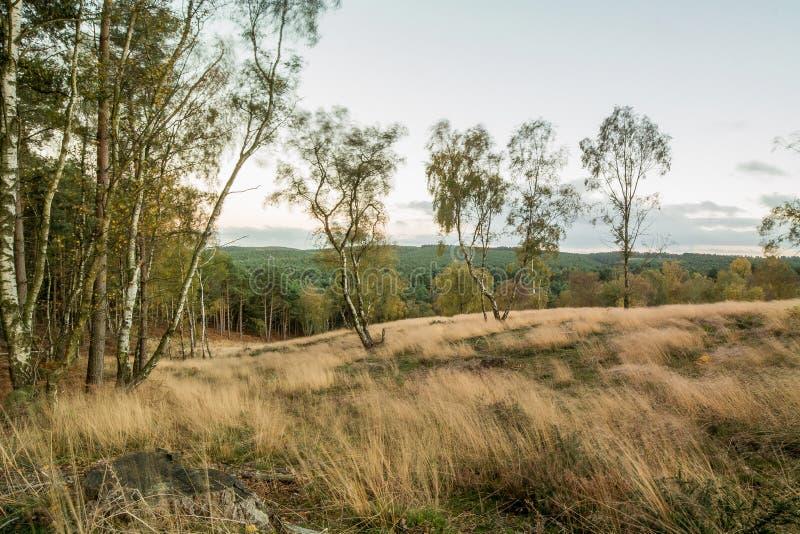 Cannock pościg las W jesieni zdjęcie stock
