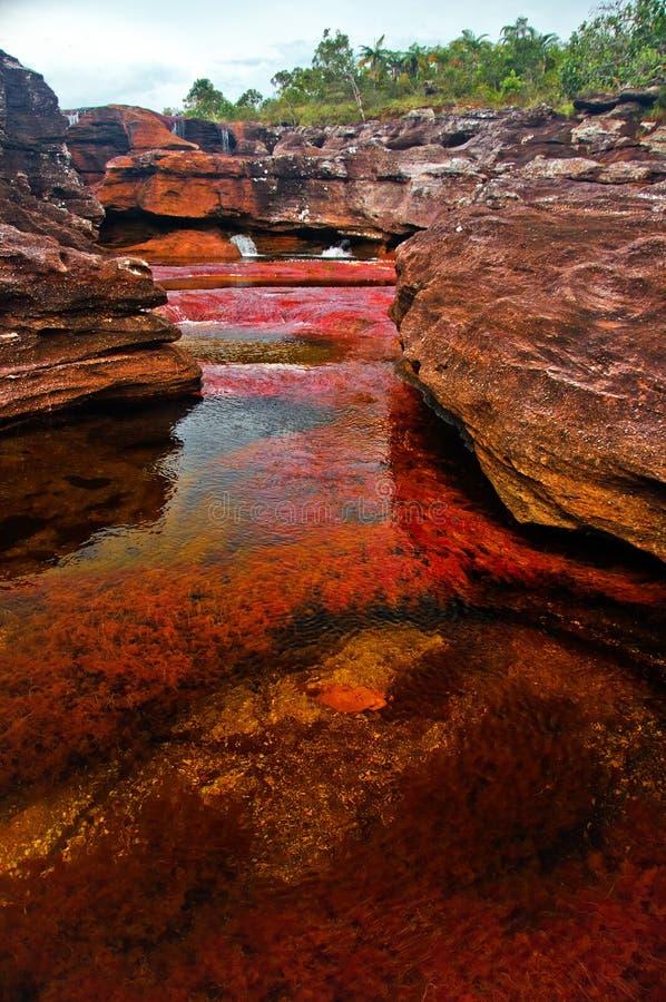 Cano Cristales, le fleuve coloré par sept image stock