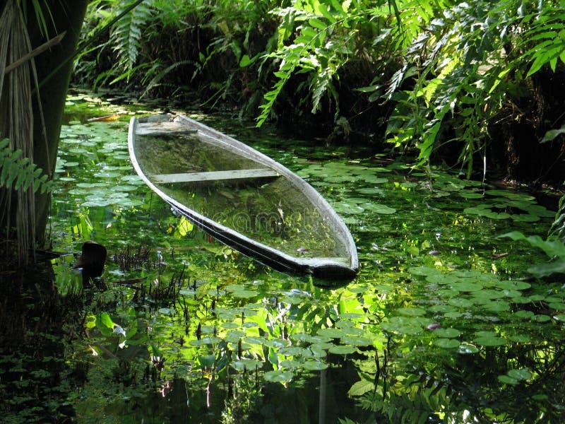 Canoa nella vegetazione fotografia stock libera da diritti